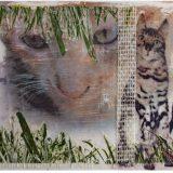 07 poes op schildersplaatweb